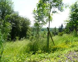 bestattungswald