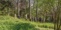 Waldbestattung Naturbestattung in der Schweiz